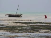 Landscape Pic Tanzania - Zanzibar